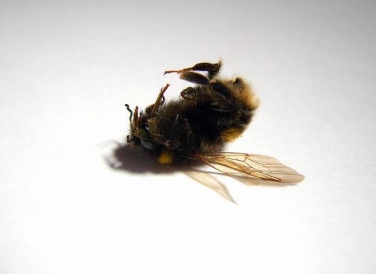 deadbee-ccflcr-orangeacid1