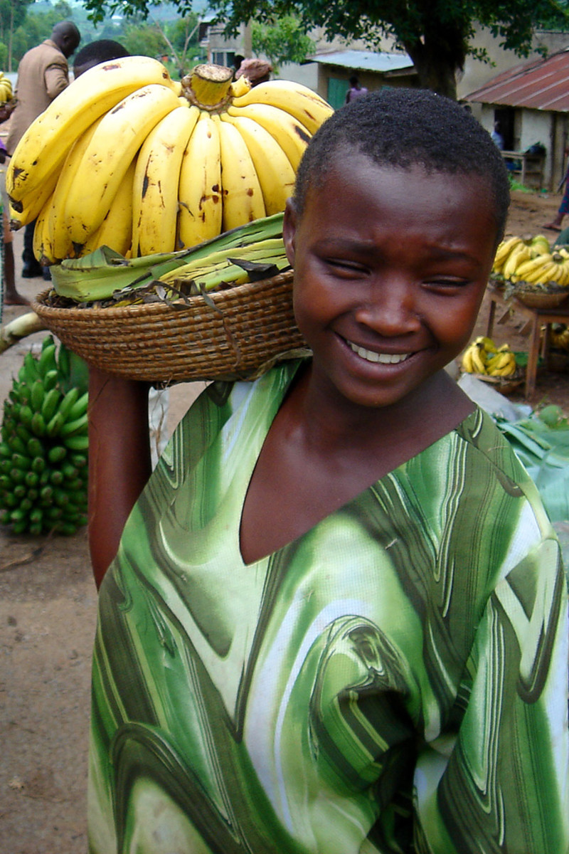 Nutrition Food: Genetically Modified Bananas Going To Uganda