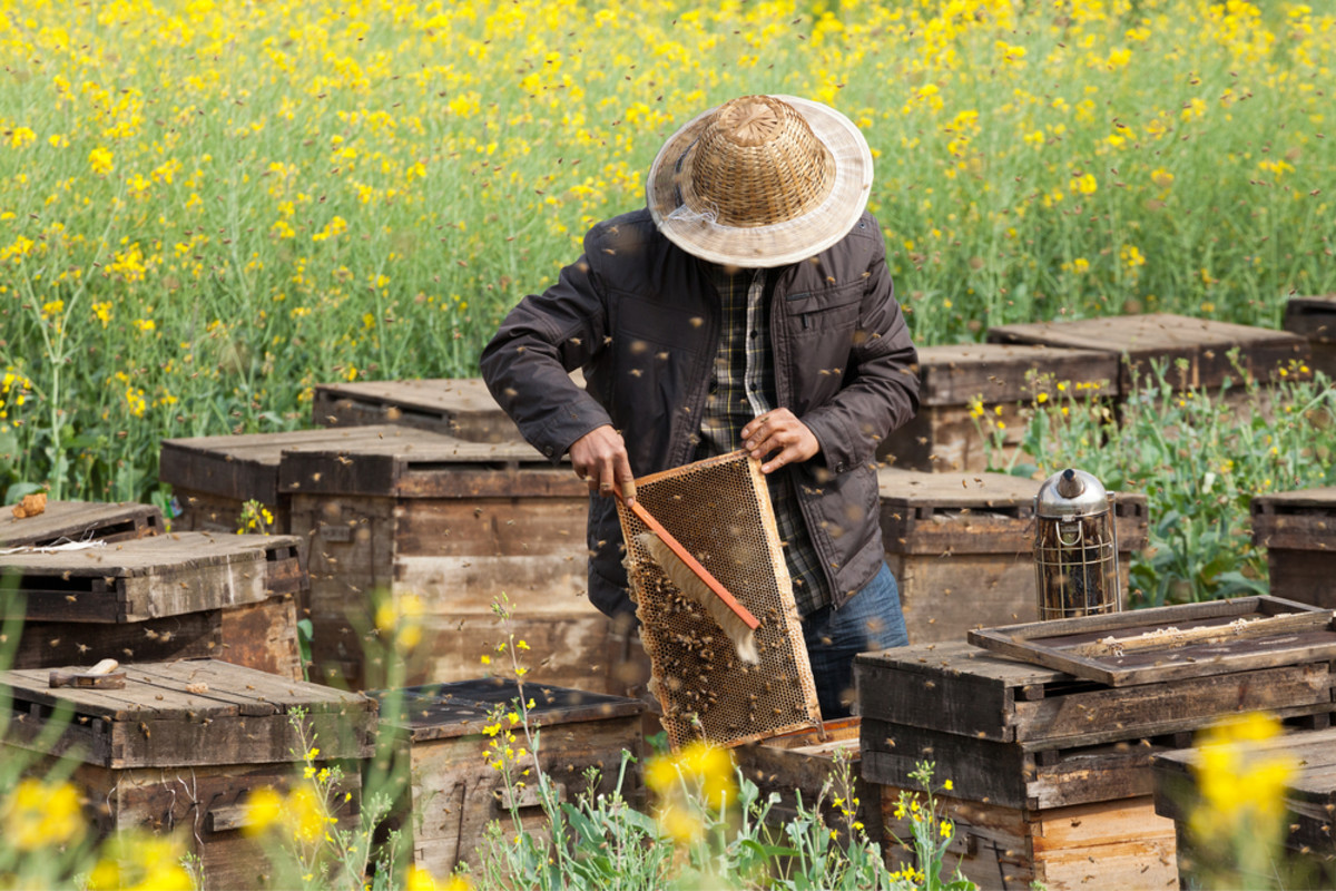 It's Definitely the Pesticides: Study Confirms Honeybee Deaths Linked to Agrochemicals