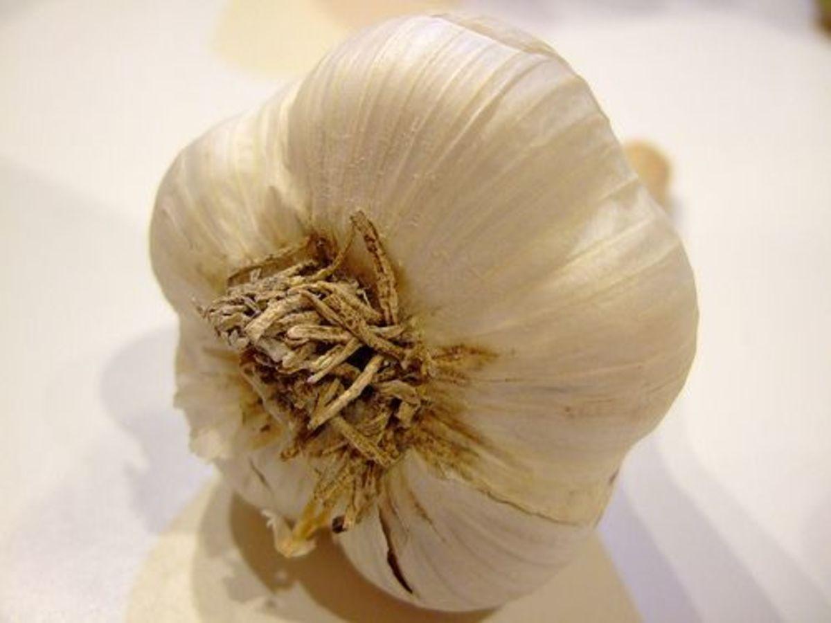 garlic-ccflcr-lowjumpingfrog