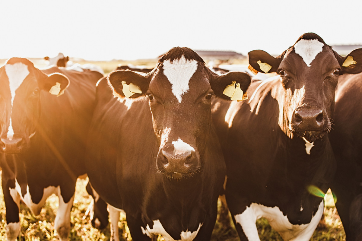 60% of Global Biodiversity Loss Linked to Meat Consumption