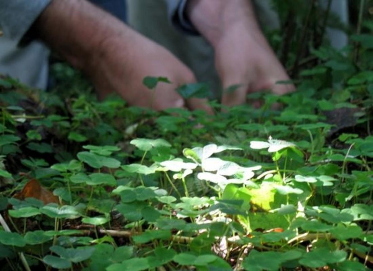 foraging-ccflcr-vidya-crawley