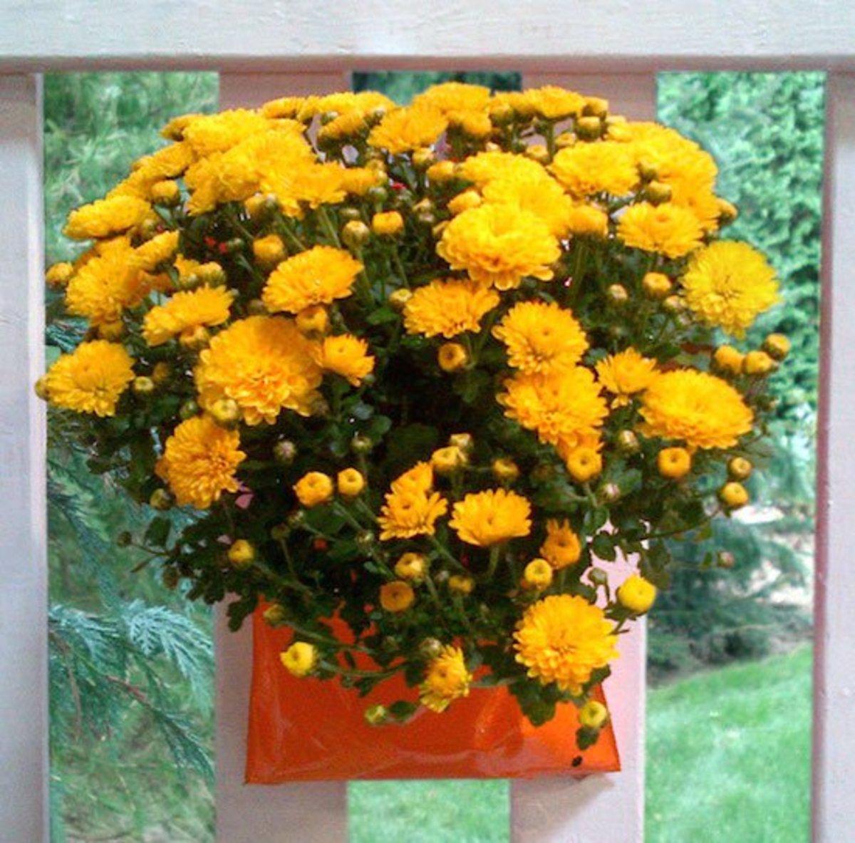 flowerpocket