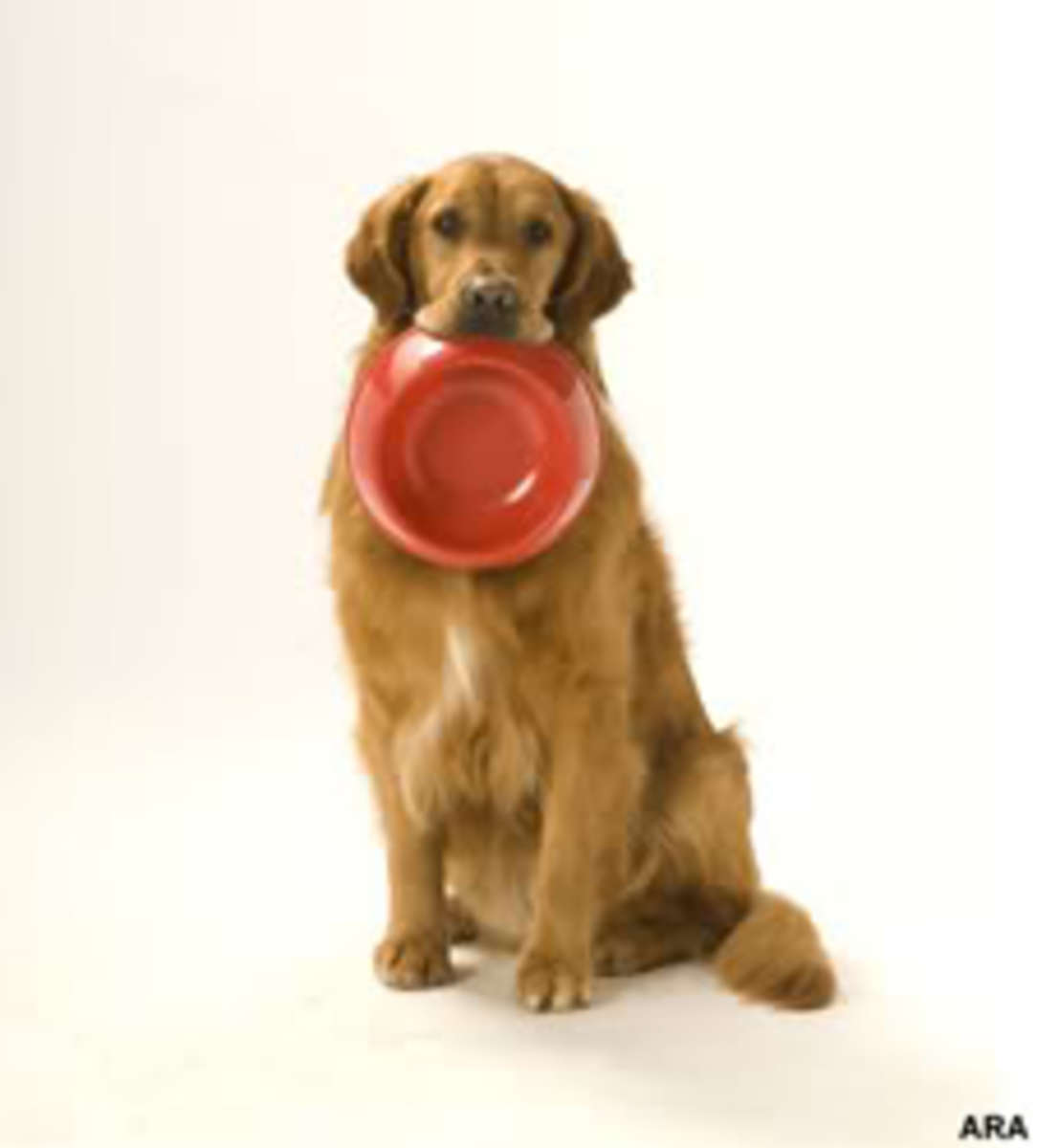 dogwithbowl1