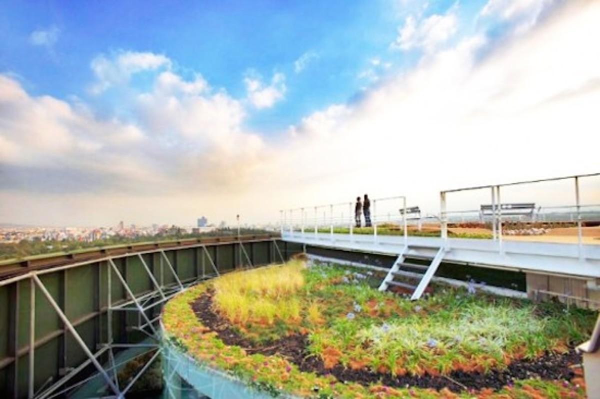 Mexico City roof garden