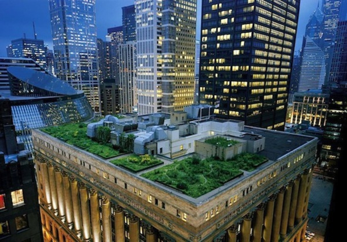 Chicago City Hall garden