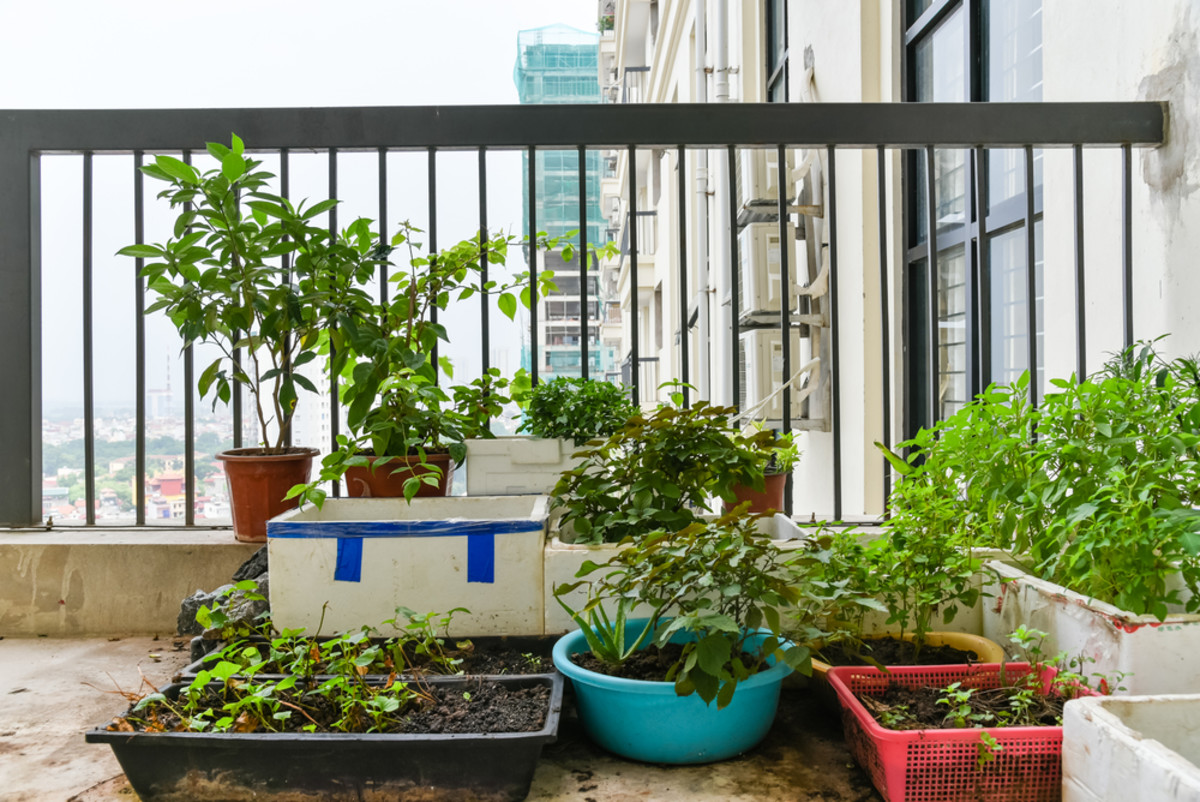 5 Practical Home Garden Solutions for City Dwellers (No More Excuses!)
