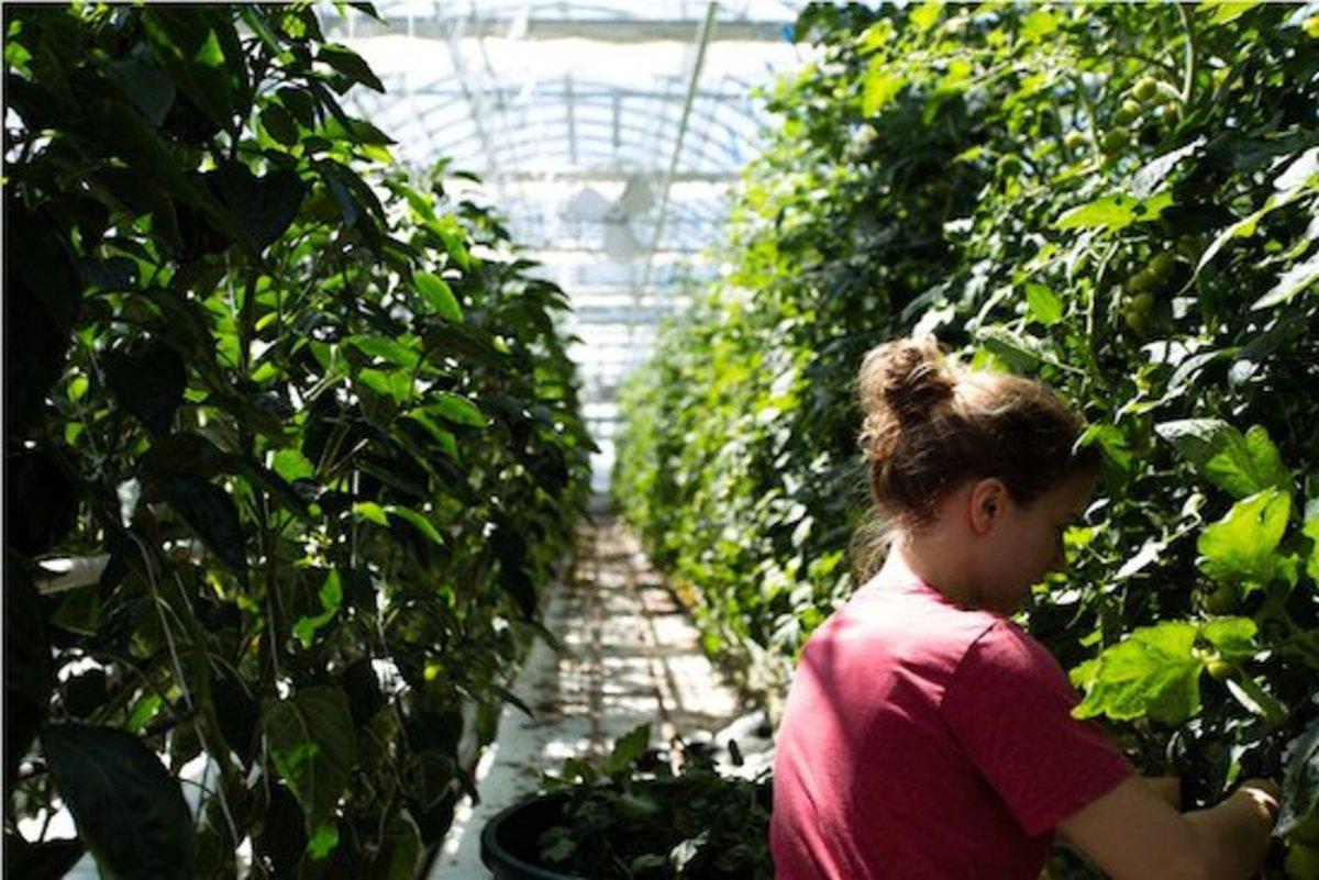 lufa farms greenhouse