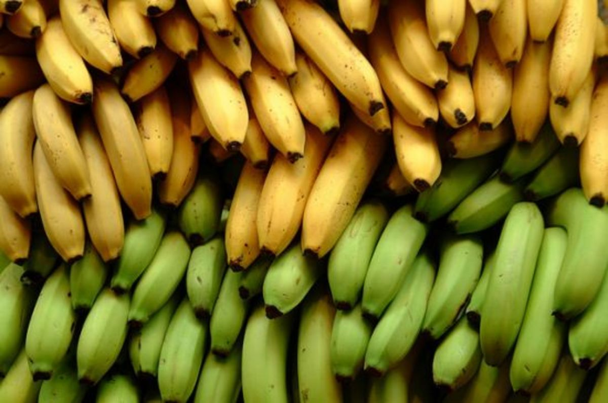 bananas-ccflcr-ian-ransley-design1