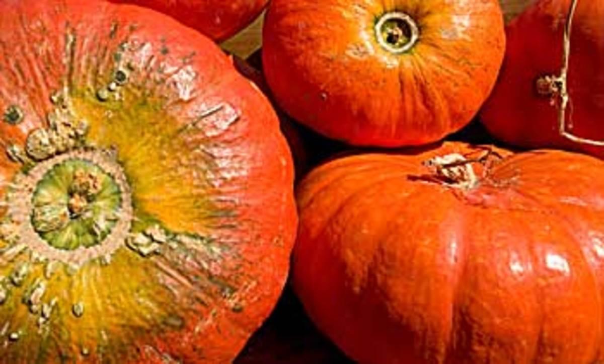 cindarela_pumpkins1
