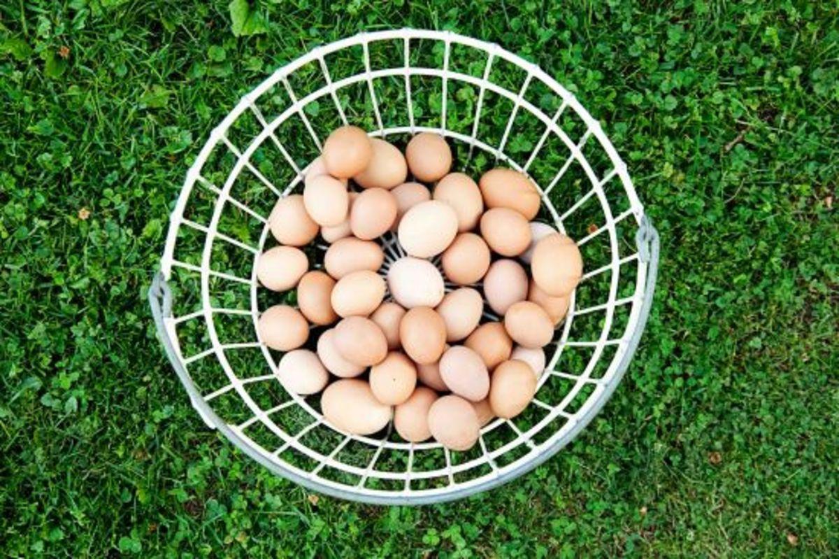 eggs-farmhouse-farmhouse
