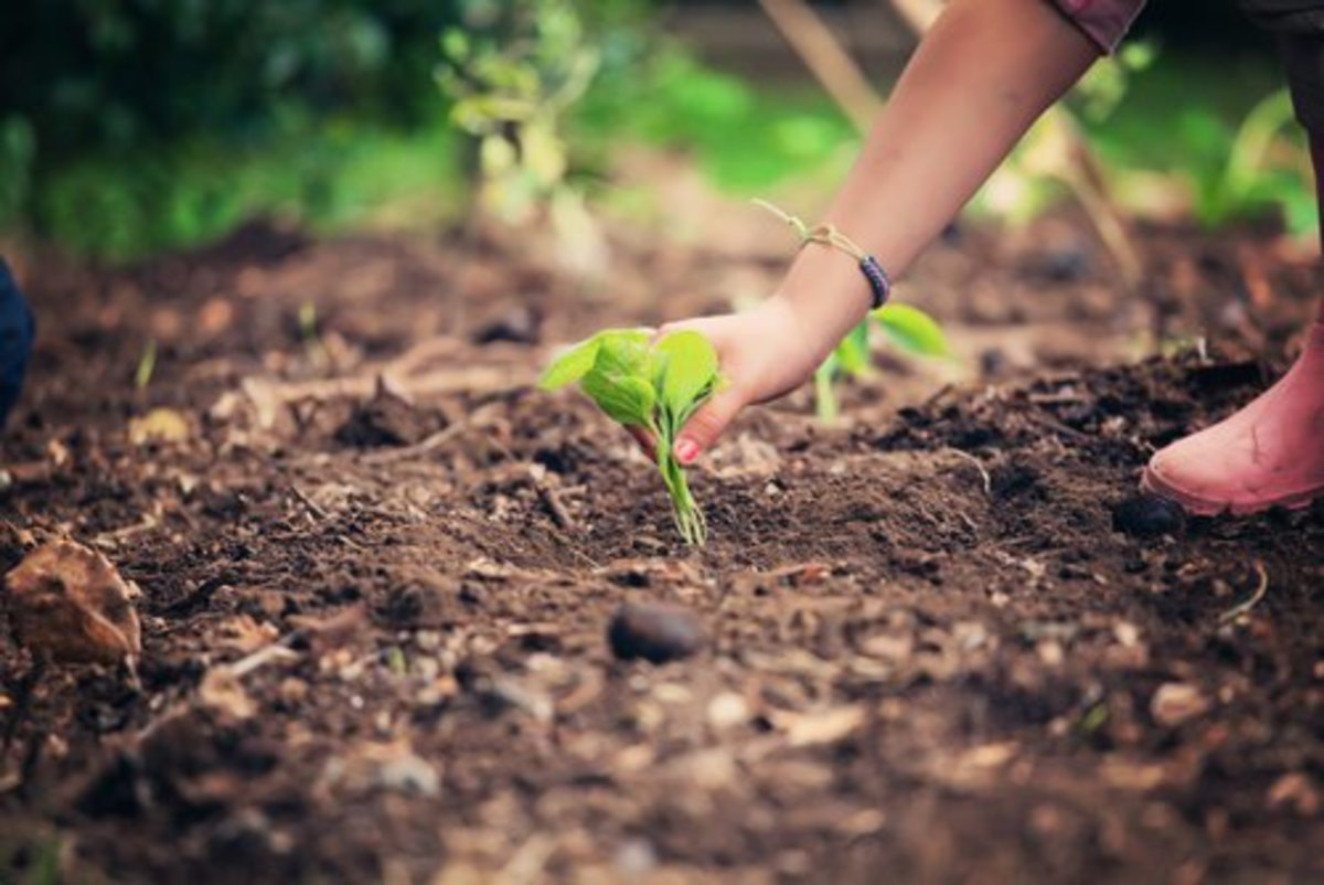 Sustainable living ideas for Earth Day.