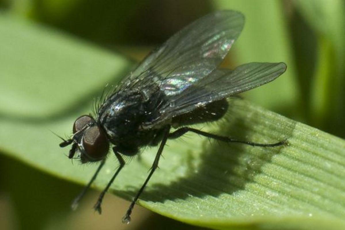 fly-ccflcr-lambroso