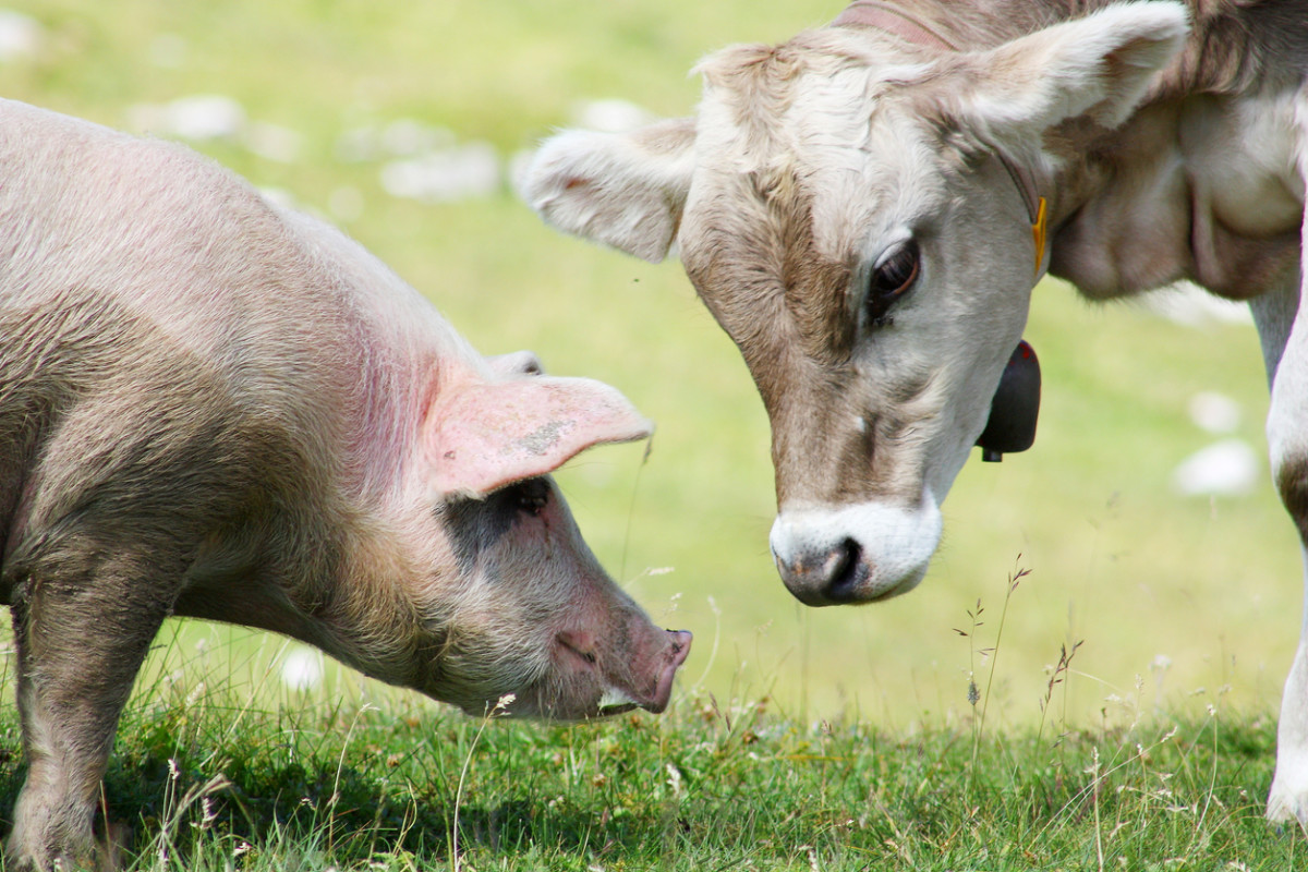Organic Trade Group Fights USDA Over Animal Welfare Standards