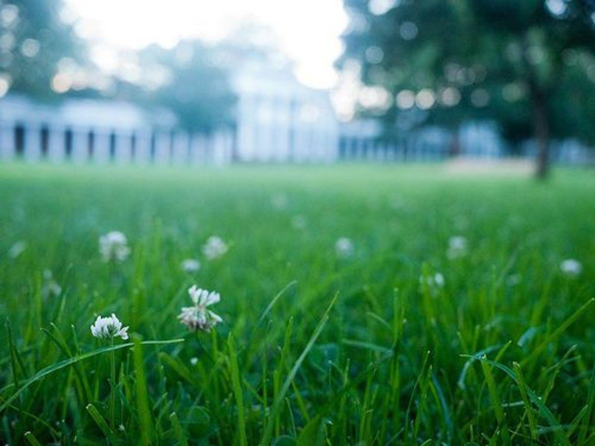 Lawn-ccflcr-koocbor