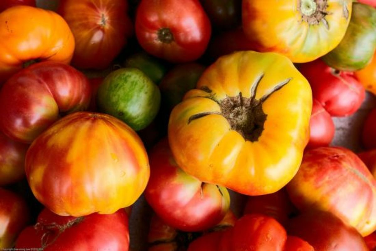 tomatoes-ccflcr-seeminglee