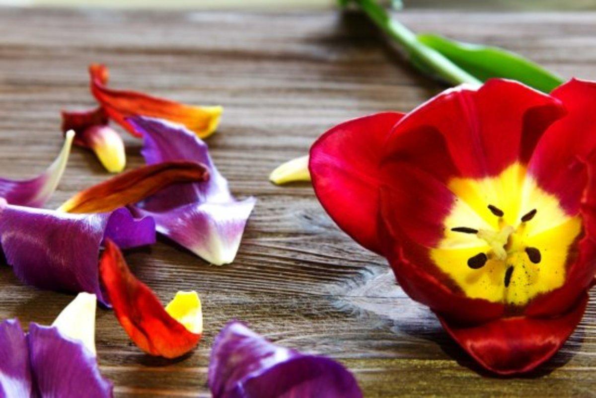 edible flowers, tulip petals