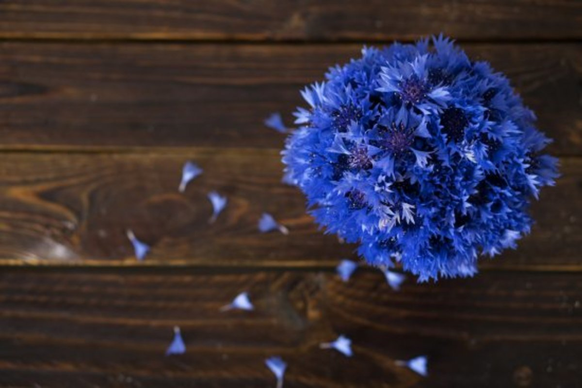edible flowers, cornflower