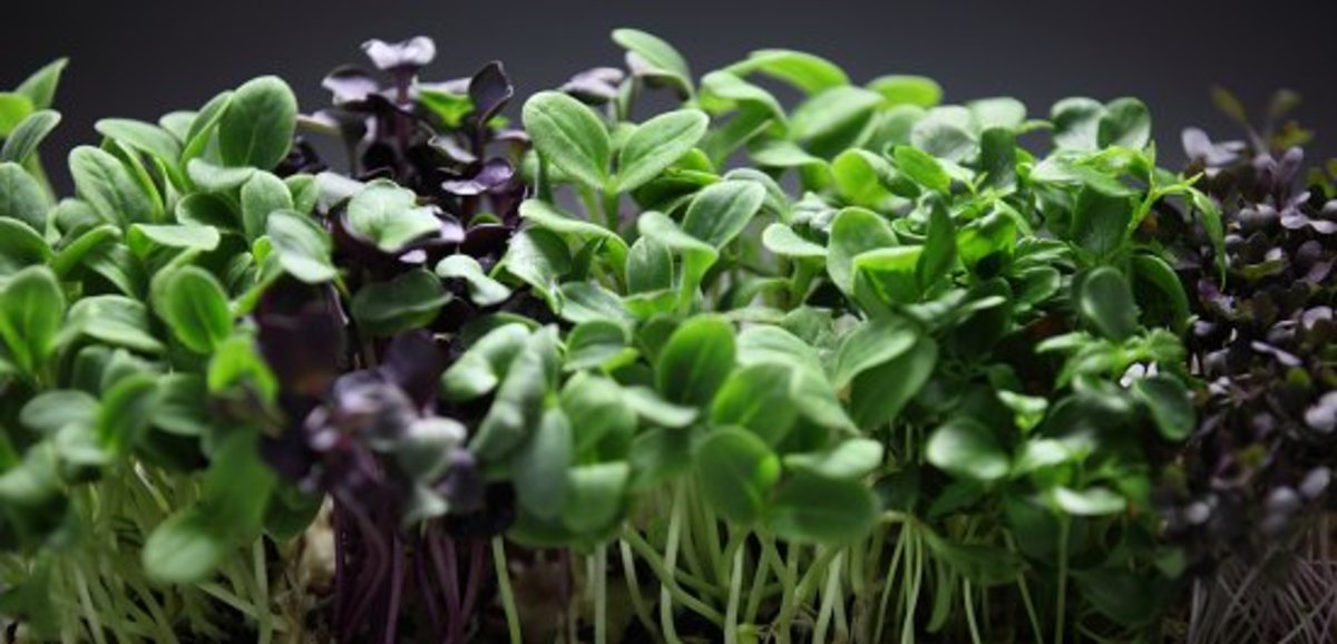 Micro Greens=Mega Nutrition: Your Guide to How to Grow Microgreens