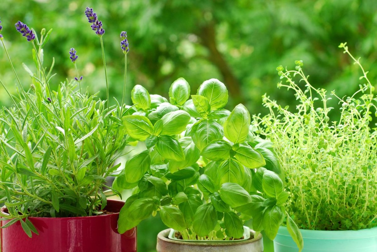 Herb Garden Pruning 101: Your Hands-On Guide to Quick and Easy Care