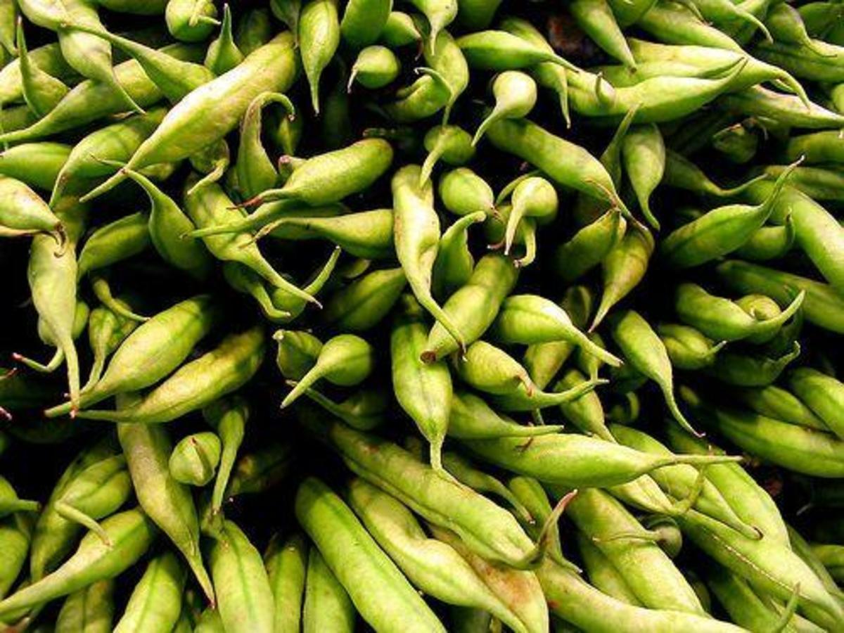 greenbeans-ccflcr-anaulin