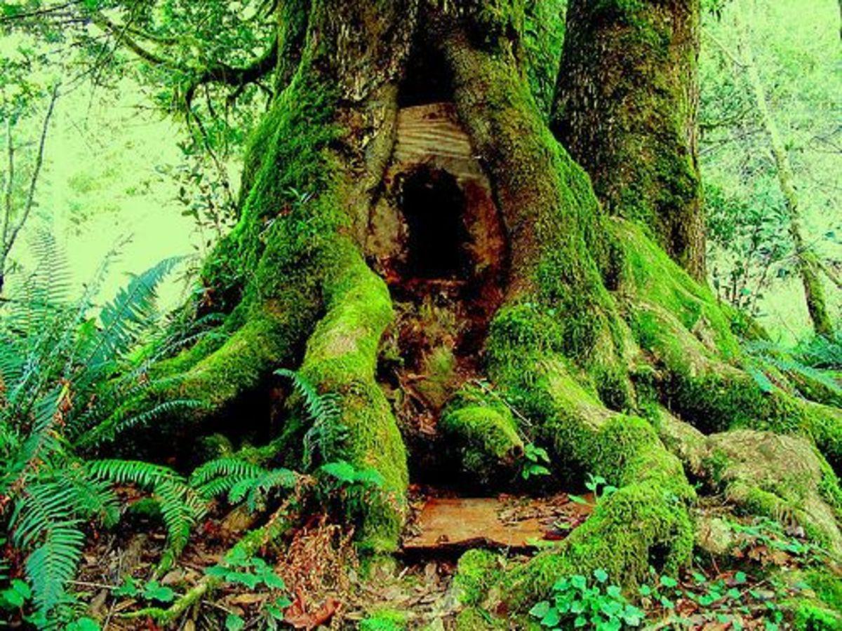 jantik_tree