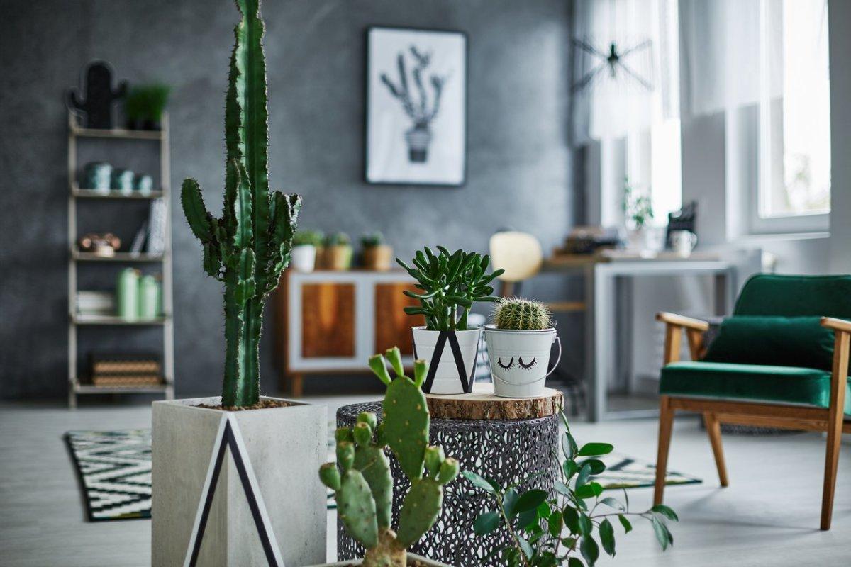 5 Low-Maintenance Succulents