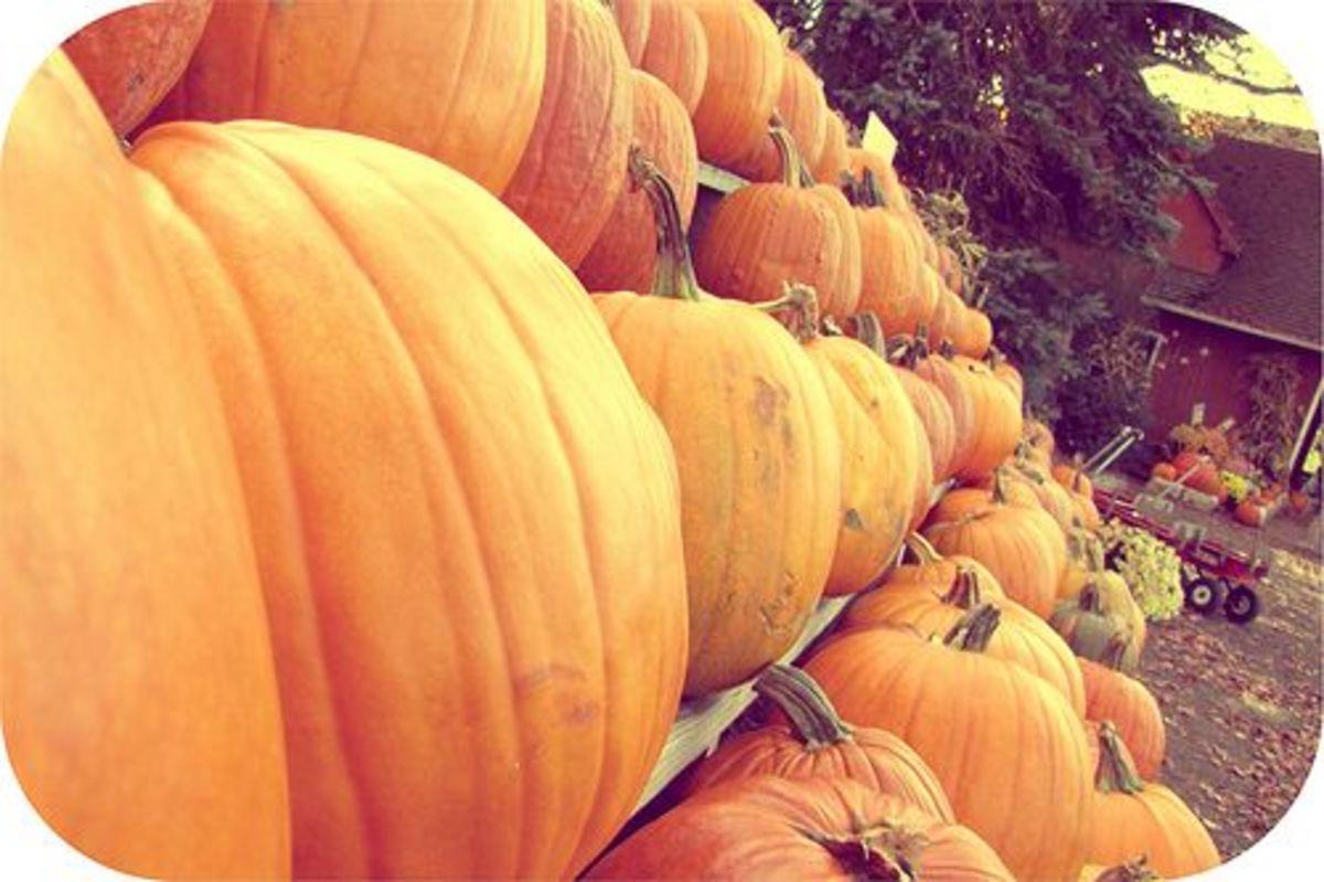 pumpkins-ccflcr-lisaclarke