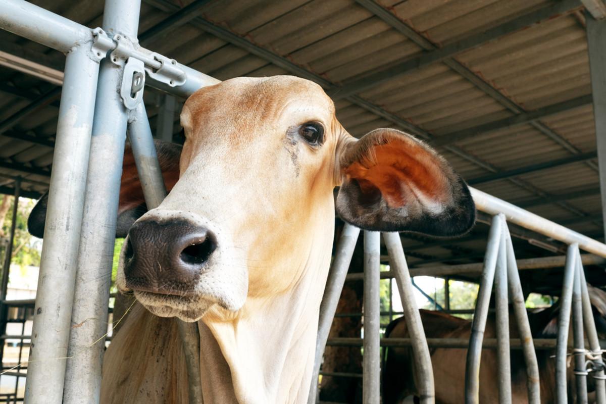 Vegan Restaurant Chain Becomes a Battleground Over 'Humane' Meat