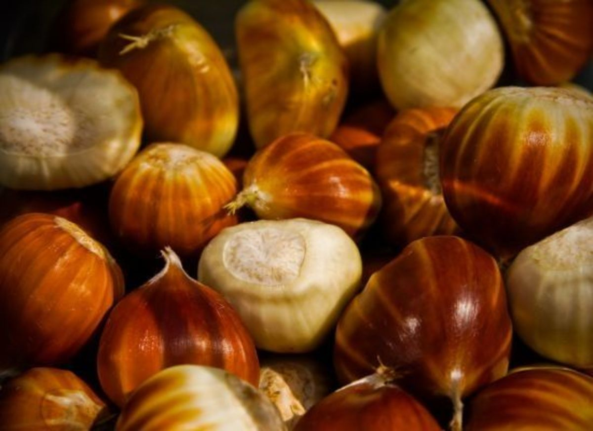 chestnuts-ccflcr-simondeanmedia