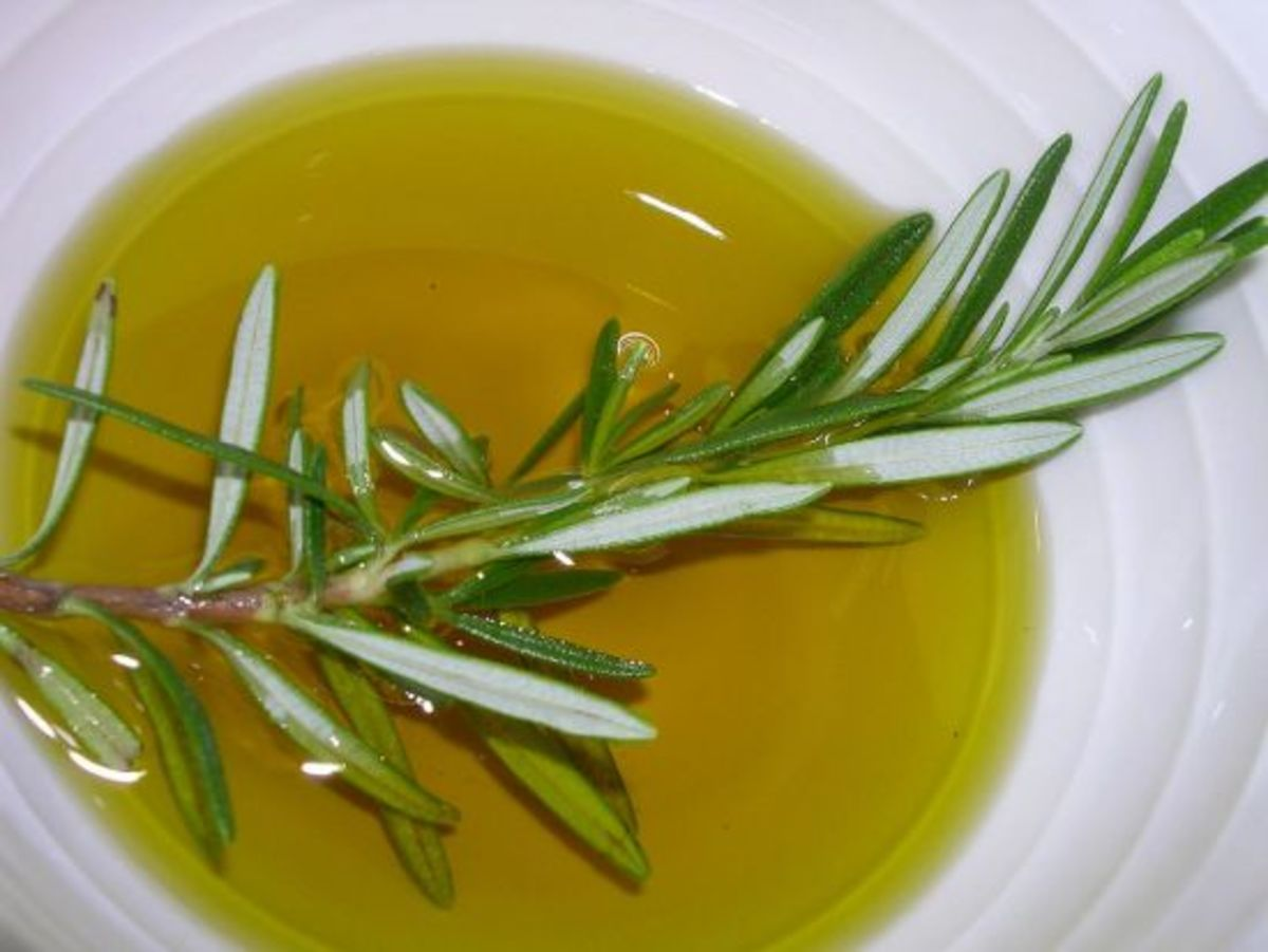 Olive oil with a sprig of fresh rosemary