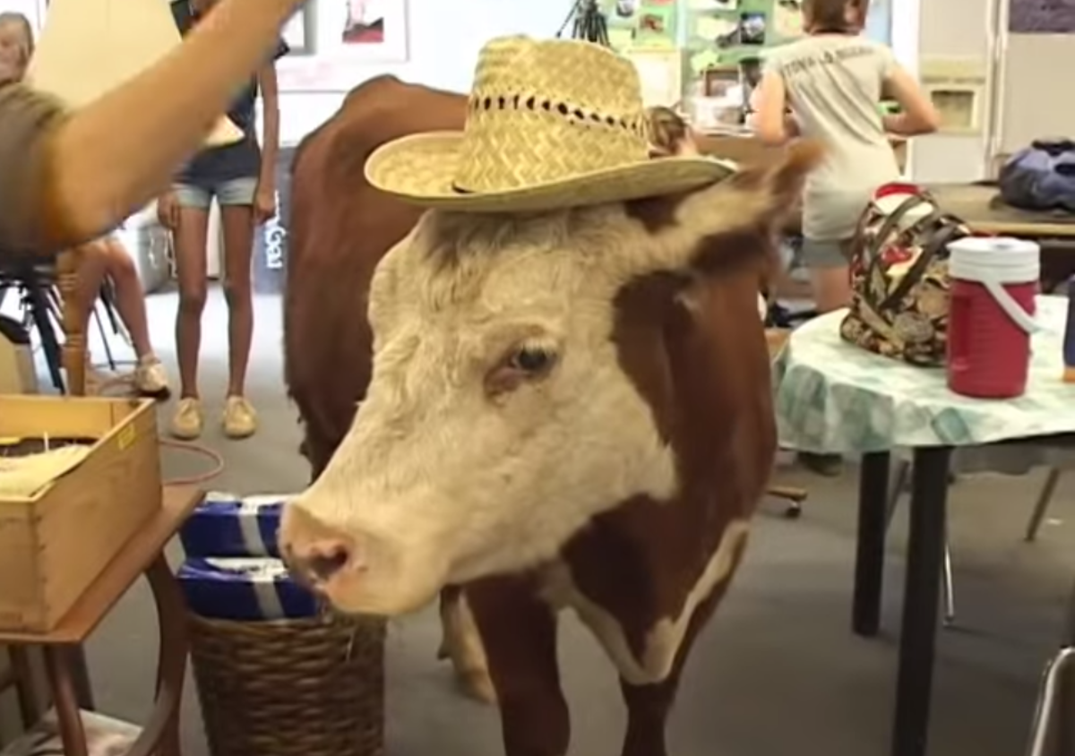 milkshake the cow