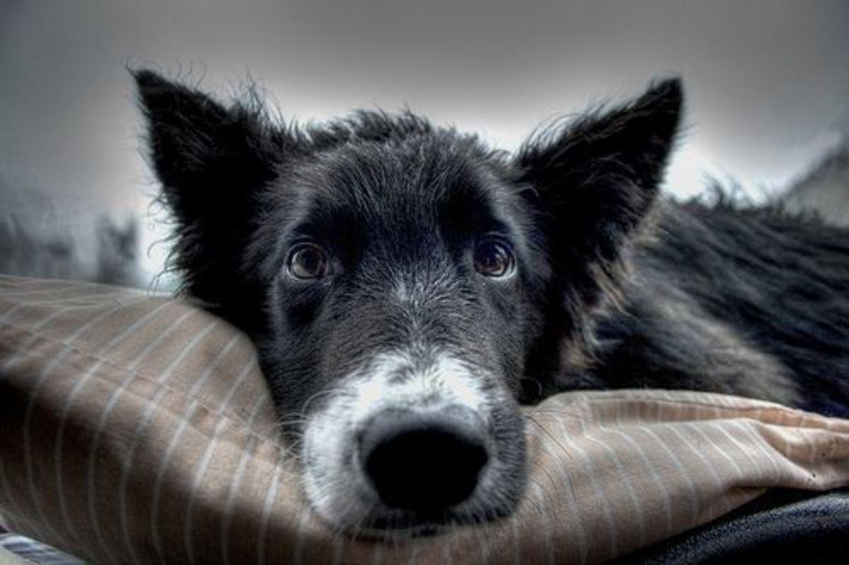 sad_dog_ccfler_Sam_W