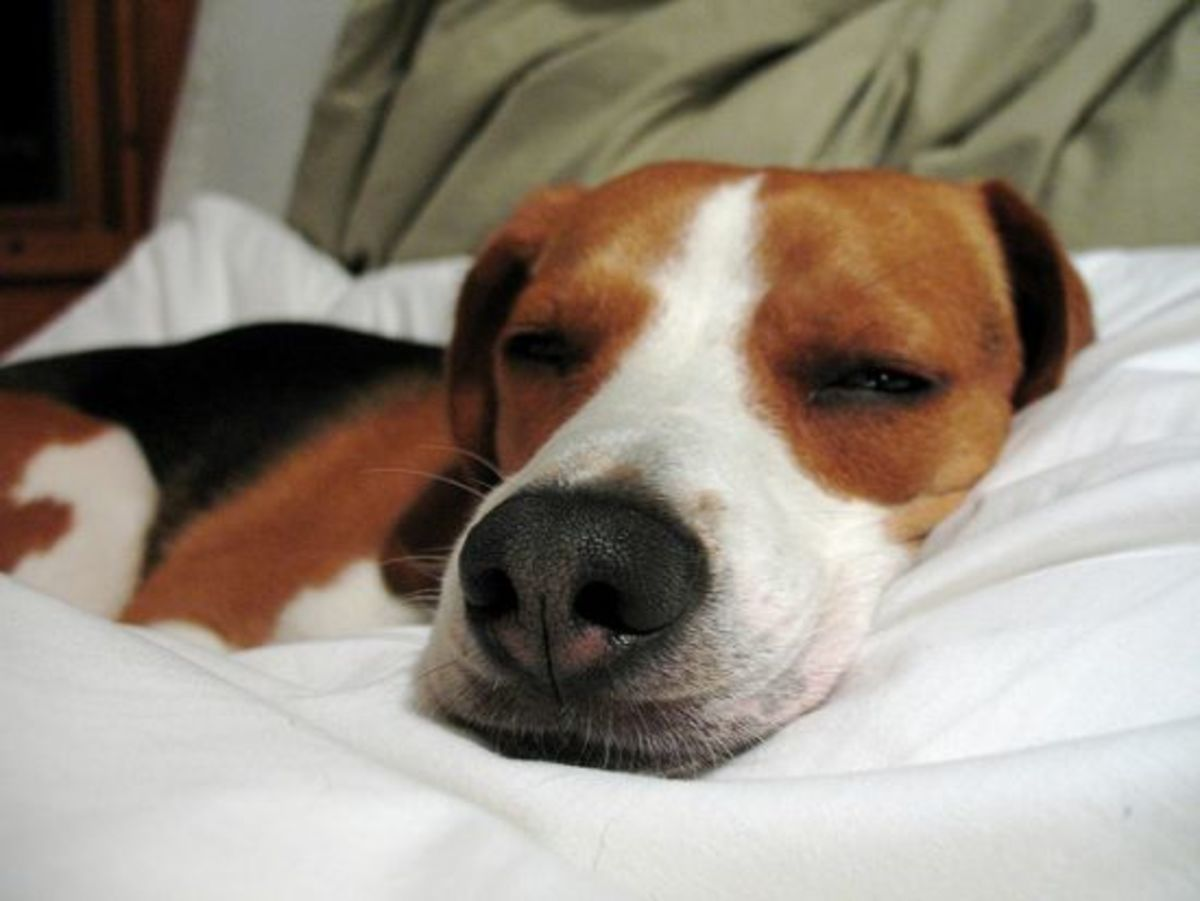 sleepingdog-ccflcr-dakotaduff