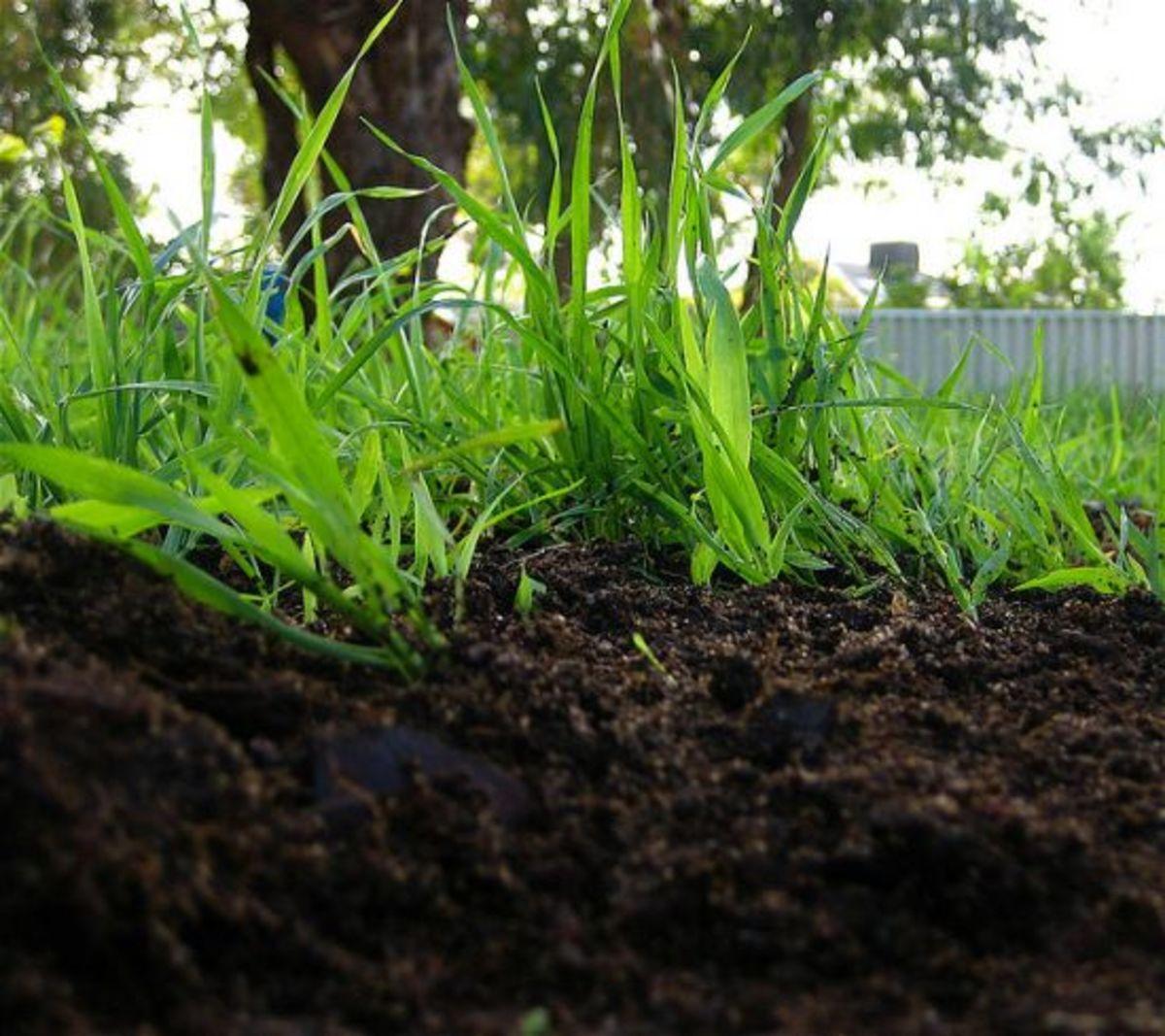 compost-ccflcr-suavehouse113