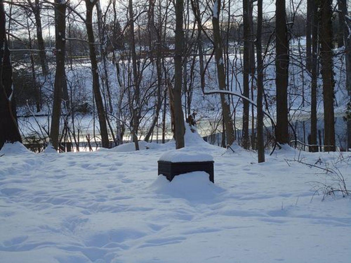 winter-compost-ccflcr-meg-stewart