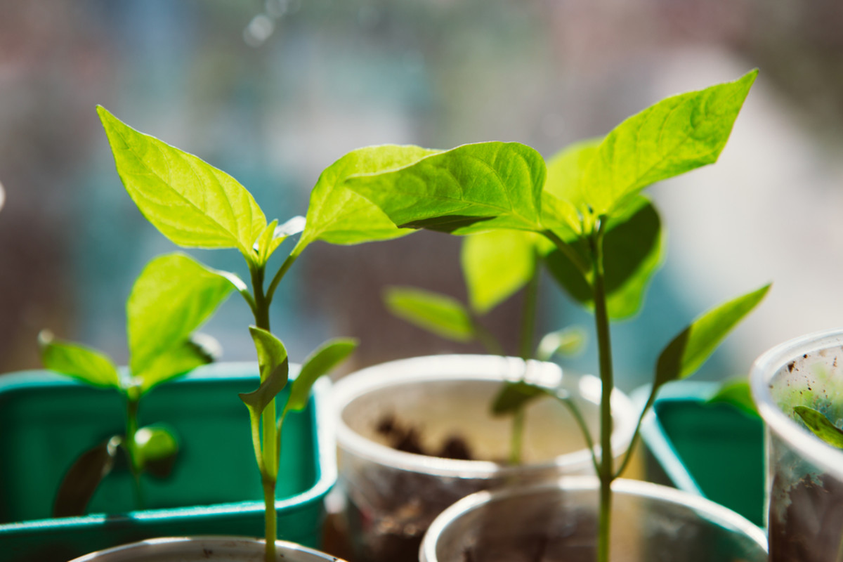 How seed saving will save biodiversity.