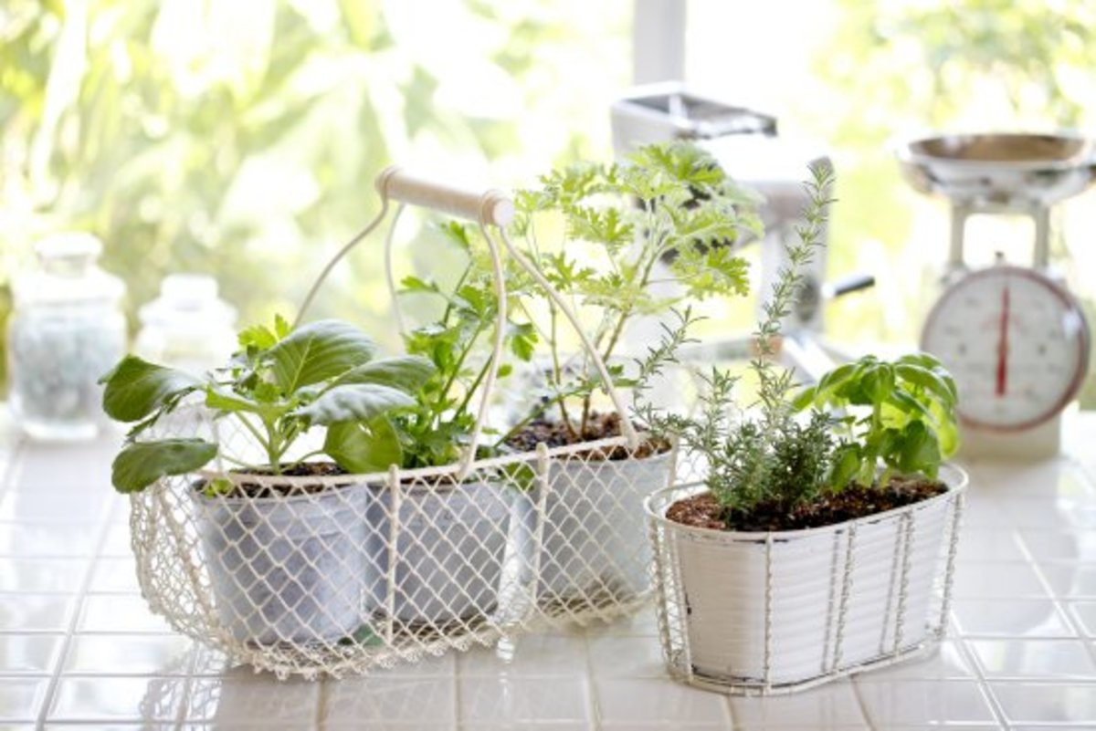 10 Simple Secrets for a Successful (and Yummy) Indoor Herb Garden