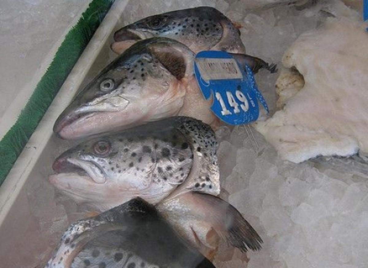 salmon-ccflcr-edkohler1