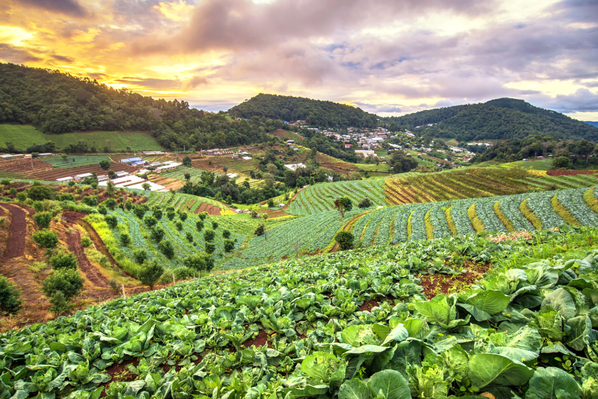 Sustainable Agriculture is the Best Way to Feed the World, New Research Confirms