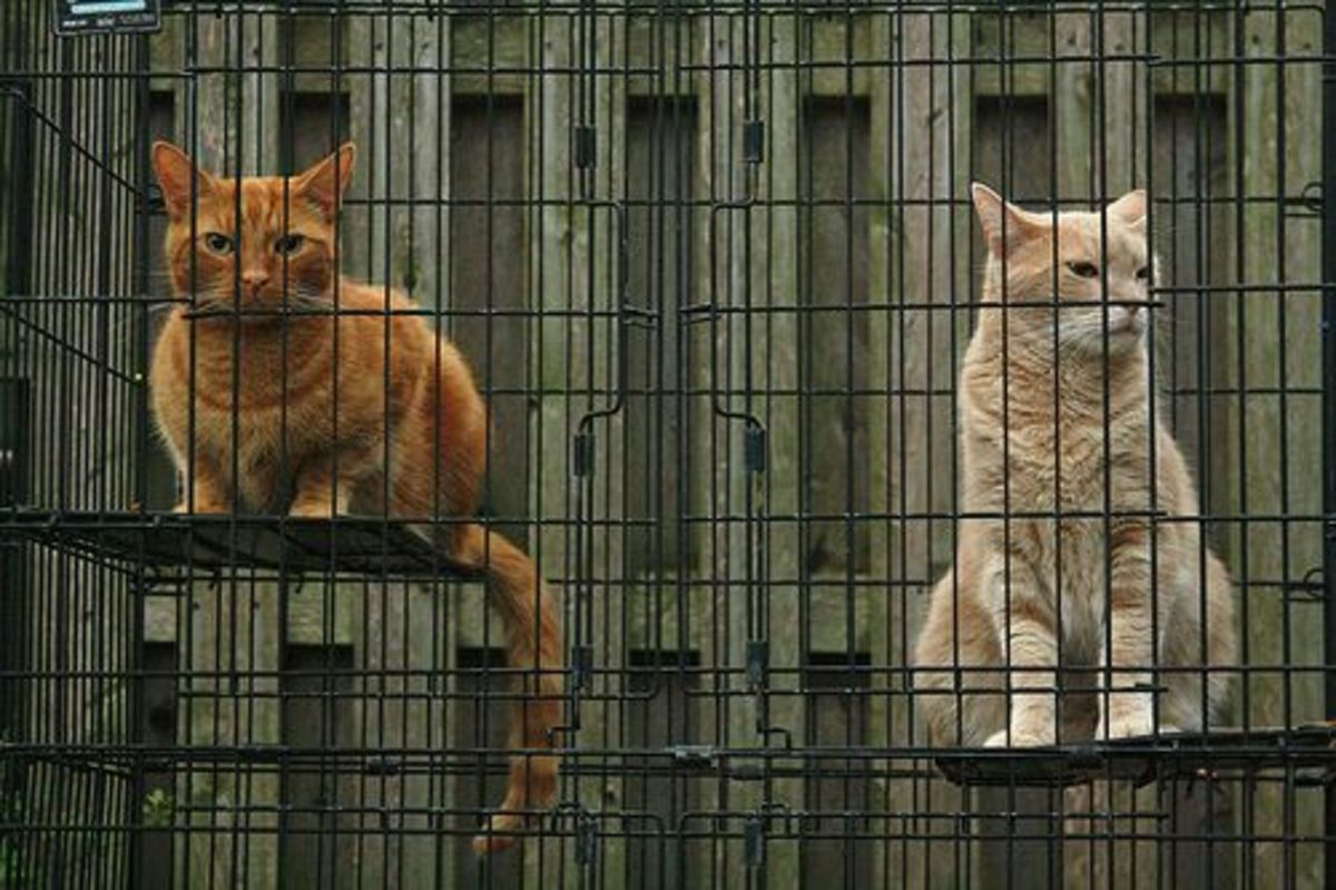 Diy Build An Outdoor Cat Enclosure In 5 Easy Steps