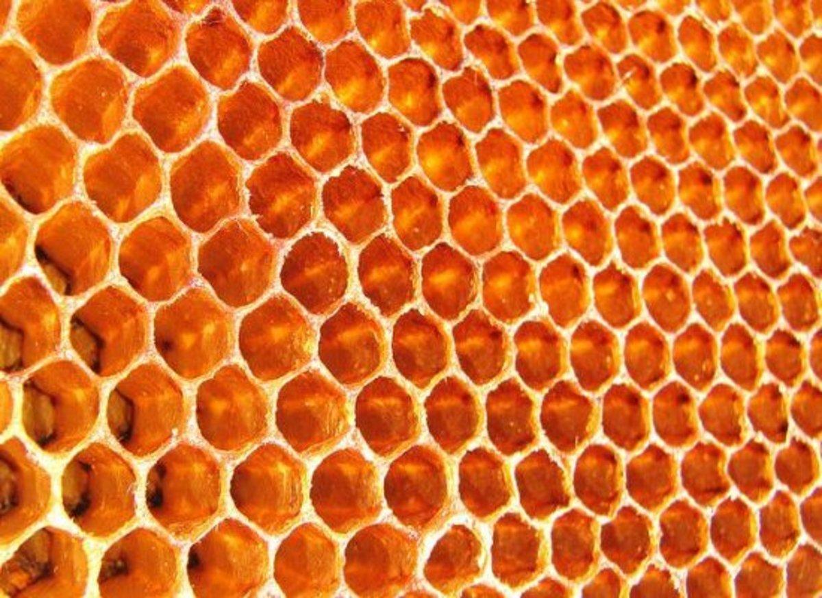 honeycomb-ccflcr-wildxplorer