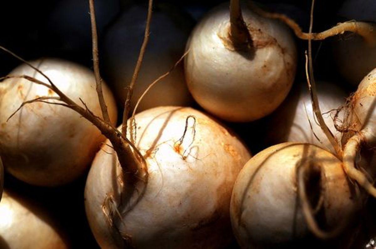 turnips-ccflcr-tibchris