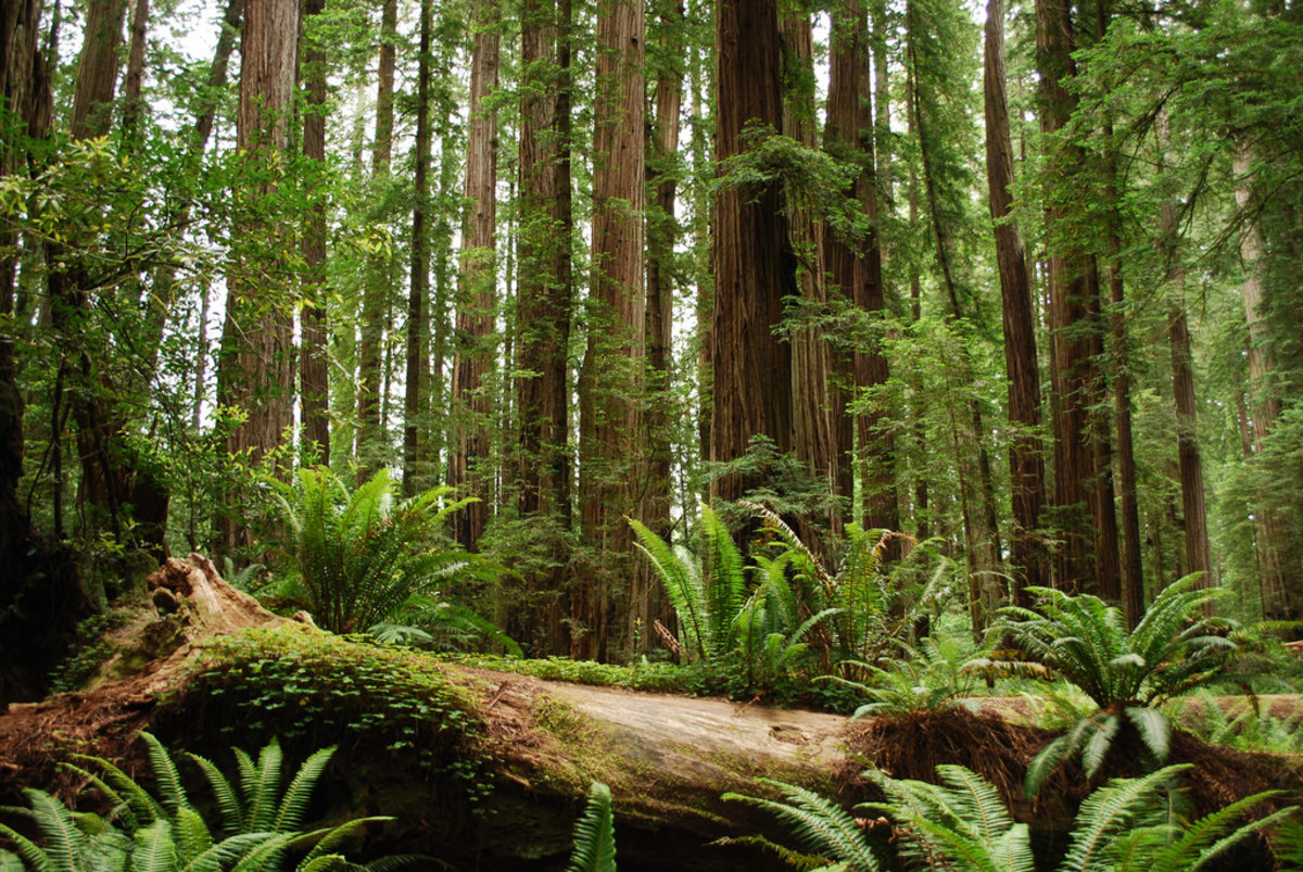 redwood forest - spiritual retreats