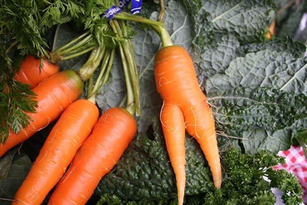 pants-carrot-beckystriepe