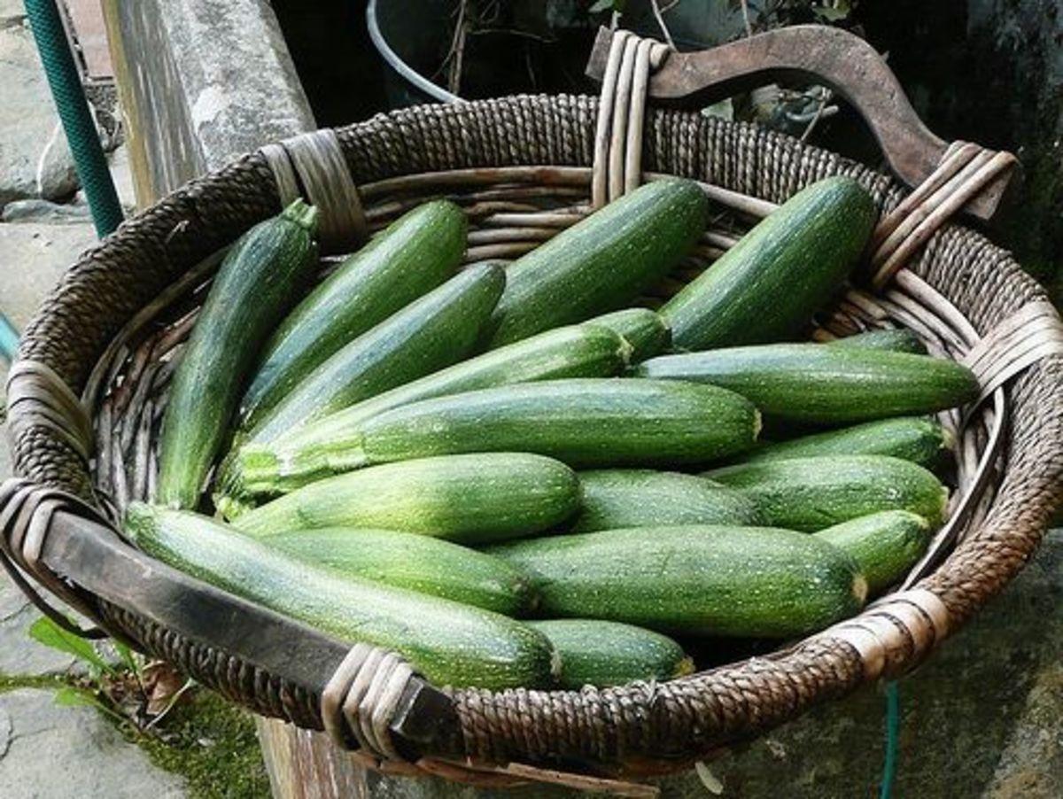 zucchini-ccflcr-nociveglia