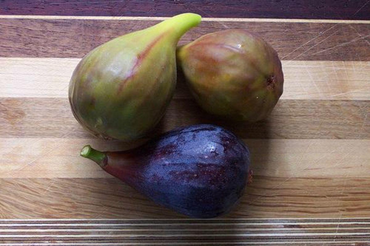 figs-ccflcr-rutemple