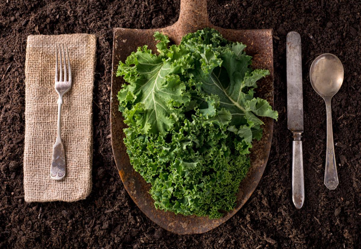 Kale on Shovel Natural Industry
