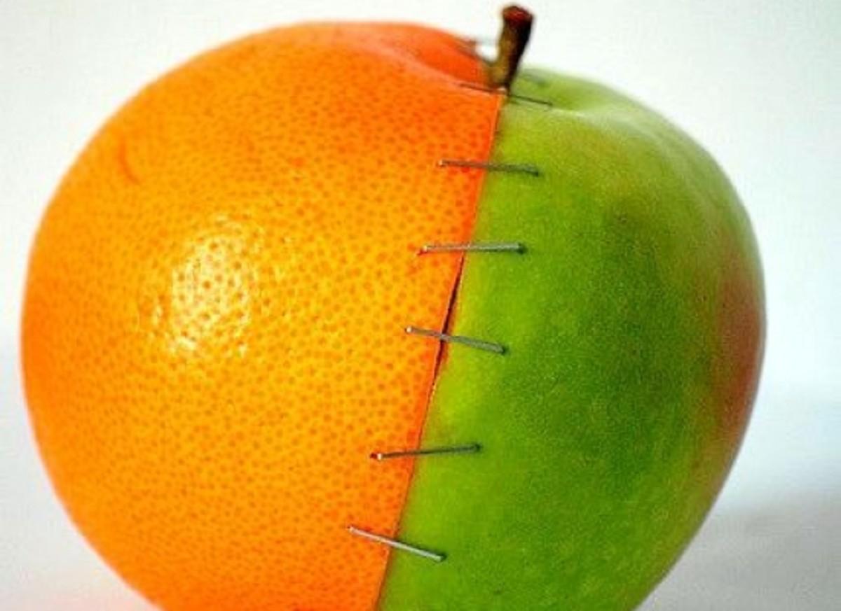 hyrbidfruit