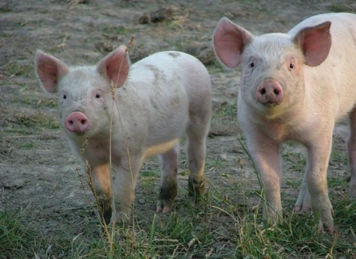 Florida's Ag Gag bill fails